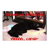 Catnip Postcards (Package of 8)