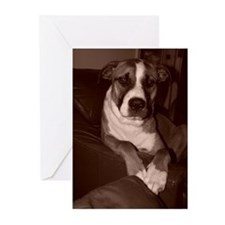 Cute Bull terrier dog breed Greeting Cards (Pk of 10)