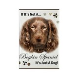 Boykin Spaniel Rectangle Magnet (10 pack)