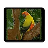 Jungle Sun Conure Mousepad