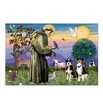 St Francis & 2 Tri Aussies Postcards (Package