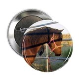 "Mini Horse 2.25"" Button (10 pack)"