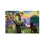St Francis Chocolate Lab Rectangle Magnet