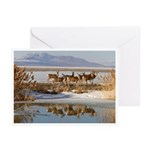 Cluster Greeting Cards (Pk of 10)