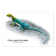 Collared Lizard Postcards (Package of 8)