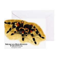 Mexican Red-Kneed Tarantula Greeting Cards (Pk of