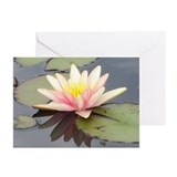 Waterlily Greeting Cards (Pk of 10)