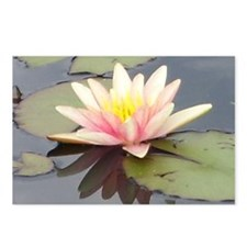 Waterlily Postcards (Package of 8)