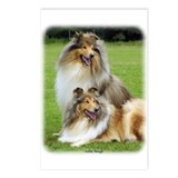 Collie Rough 9R060D-135 Postcards (Package of 8)