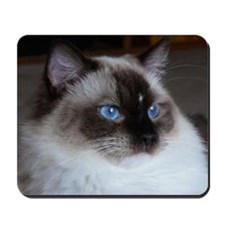 Seal Mitted Ragdoll Mousepad