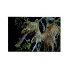 Sea Dragons by Karen Rectangle Magnet