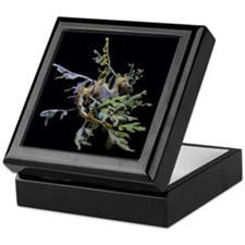 Sea Dragons by Karen Keepsake Box