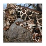 Giraffe Drink Coasters