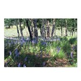 Wildflowers - Lupines Postcards (Package of 8)