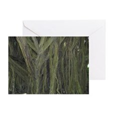 Old Banyan Tree Greeting Cards (Pk of 20)