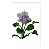 Water Hyacinth Postcards (Package of 8)