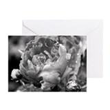 Cute Peonies Greeting Cards (Pk of 20)