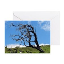 Windblown Tree Greeting Cards (Pk of 20)