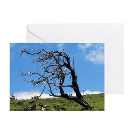 Windblown Tree Greeting Cards (Pk of 10)