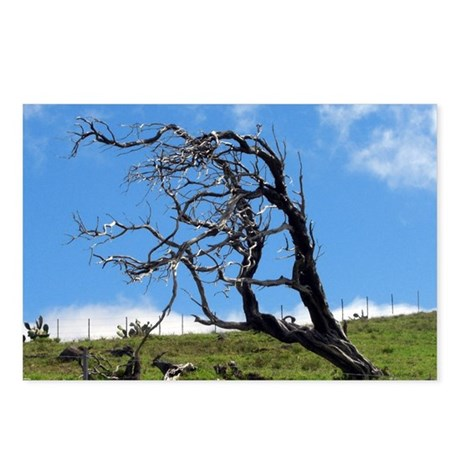 Windblown Tree Postcards (Package of 8)