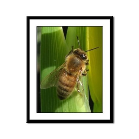 White Flower Bee Framed Panel Print