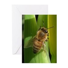 White Flower Bee Greeting Cards (Pk of 20)