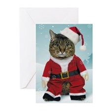 Santa Cat Christmas Cards (Pk of 20