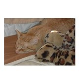 Orange Tabby Cat Postcards (Package of 8)