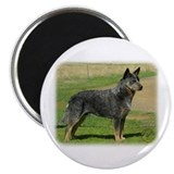 "Australian Cattle Dog 9F060D-06 2.25"" Magnet (100"