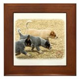 Australian Cattle Dog 8T57D-18 Framed Tile