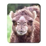 Dromedary Close-Up Mousepad