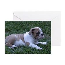 Bulldog Greeting Card