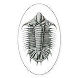Trilobite 3 Oval Decal