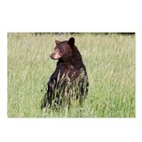Black Bear Postcards (Package of 8)