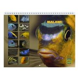 Malawi Cichlids Portraits Calendar 2013