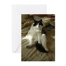 Black and White Longhaired Cat Greeting Cards (Pk