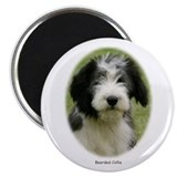"Bearded Collie 9Y049D-018 2.25"" Magnet (100 pack)"