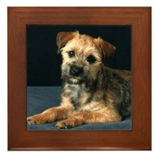 Border Terrier (Kelsea) Framed Tile
