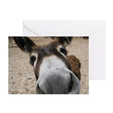 Curious Burro Greeting Cards (Pk of 10)