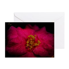 Madison Perry Greeting Cards (Pk of 20)