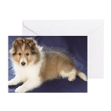 TLC OASIS SHELTIES Greeting Cards (Pk of 10)