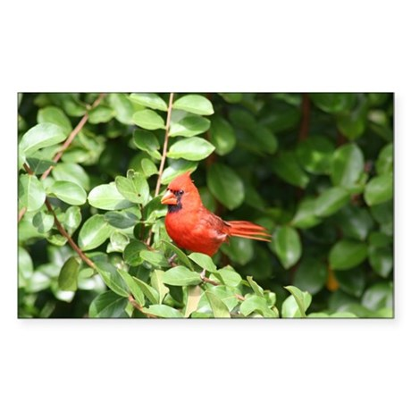 Beautiful Cardinal Red Bird Rectangle Sticker