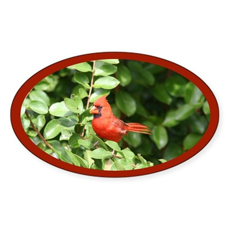 Beautiful Cardinal Red Bird Oval Sticker