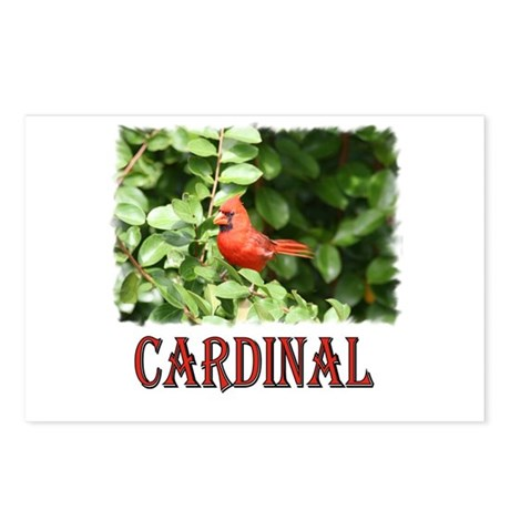 Northern Cardinal Postcards (Package of 8)