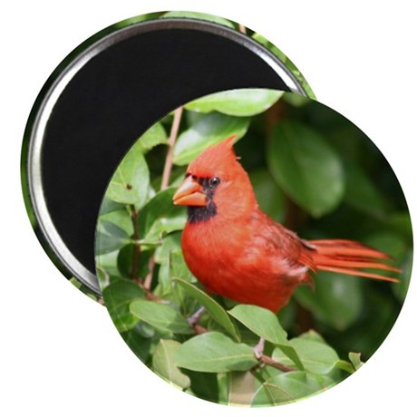 Beautiful Cardinal Red Bird Magnet