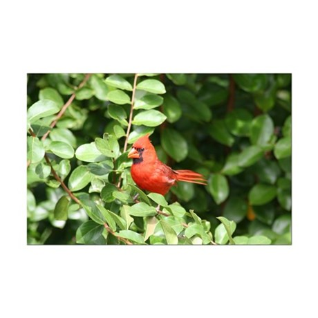 Beautiful Cardinal Red Bird Mini Poster Print