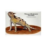 Texas Horned Lizard Rectangle Magnet