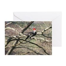 Pileated Woodpecker Greeting Cards (Pk of 20)