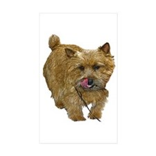Norwich Terrier Rectangle Sticker 10 pk)