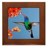 Cute Hummingbirds Framed Tile